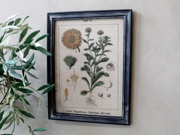 Bild Pflanzenmotiv Rahmen Antik Schwarz Shabby Vintage Landhaus Wandbild Deko Klein